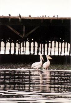 Bird Island - Hafen Walvis Bay
