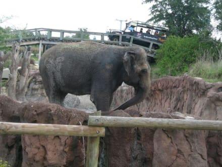 Elefantengehege - Busch Gardens