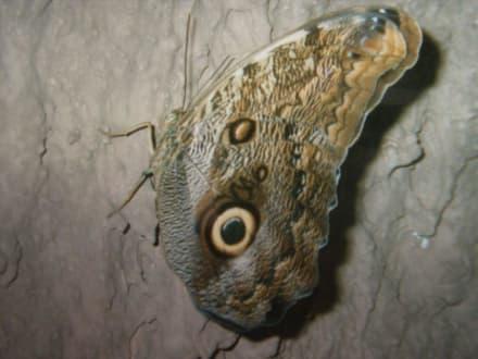 Schöner Schmetterling - Insel Mainau