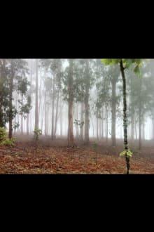 Forêt/Jungle - Pontevedra