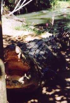 Crocodile Farm Johnstone River - Wooroonooran National Park