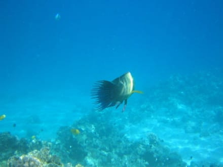 riff - Tauchen Makadi Bay