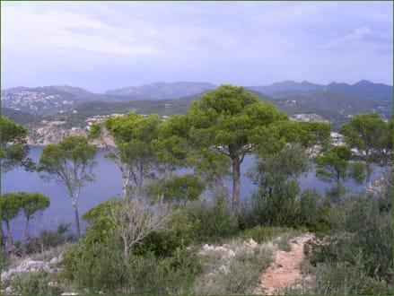 Auf dem Weg zum Cap Andritxol - Wandern Paguera
