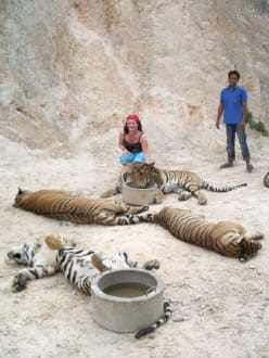 Ich und viele Tiger - Tigertempel