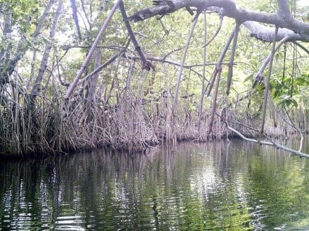 Black River Mangrovengebiet - Bootstour Black River
