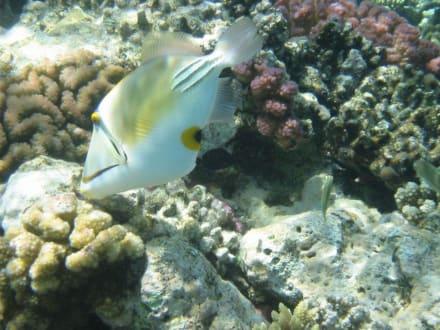 Unterwasserwelt - Schnorcheln Hurghada