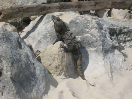 Am Strand von Tulum - Ruinen von Tulum
