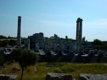 Apollon Tempel von Didyma - Apollon Tempel von Didyma