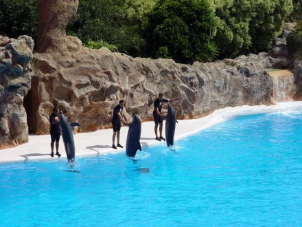 Loro Park - Delfin - Show - Loro Parque
