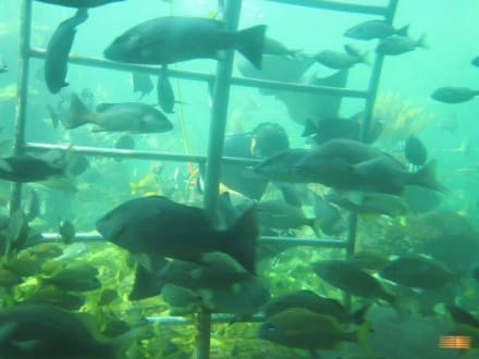 Fütterung der Aquarium-Fische - Seaquarium