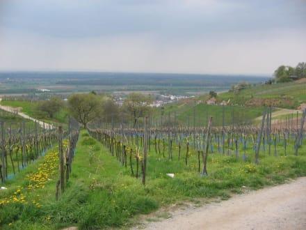 Weinberge - Zwingenberg