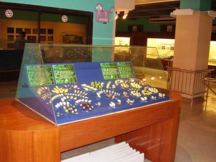 Im Muschelmuseum - Seashell Museum