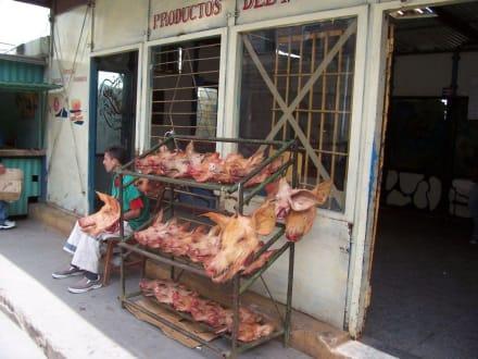 Schweineköpfe - Altstadt Havanna