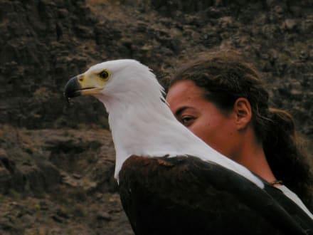 Raubvogelshow im Palmitos-Park - Palmitos Park