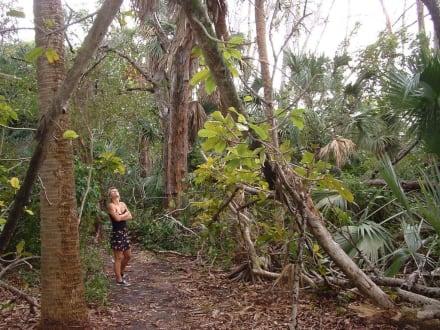 Natur in mitten der Stadt - Biscayne Park Miami Shores