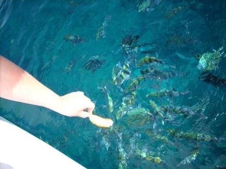 Lauter bunte Fische - Schnorcheln Makadi Bay
