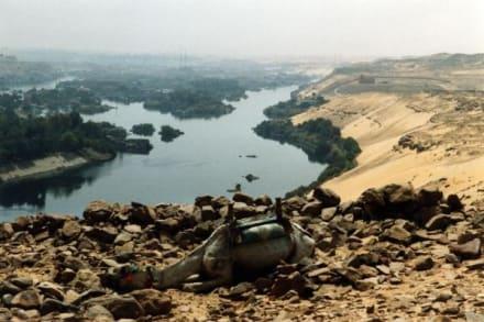 Müdes Kamel - Gräberberg von Assuan