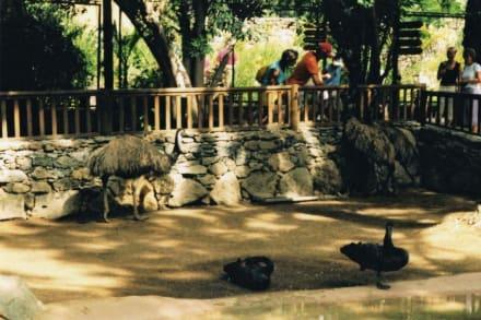Palmitos Park - Emus - - Palmitos Park
