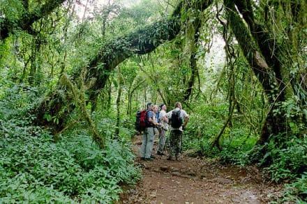 Unterwegs im Urwald - Kilimanjarobesteigung