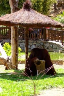 Schattiges Plätzchen im Palmitos Park - Palmitos Park