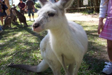 Ein Albino Socceroo - Australia Zoo