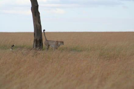 die drei Brüder - Masai Mara Safari