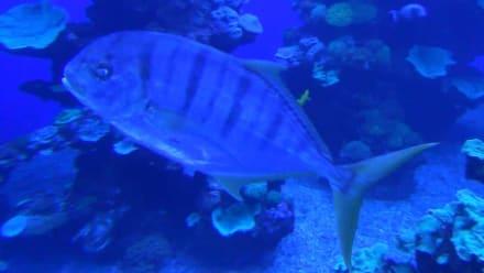 Palma Aquarium - Palma Aquarium