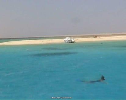 Tobia Island - Tobia Island