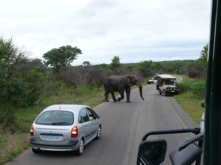 Elefanten haben Vorfahrt... - Krüger Nationalpark