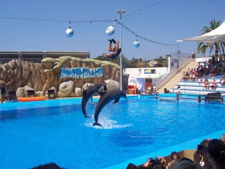 Delfin und Seehungeshow - Marineland