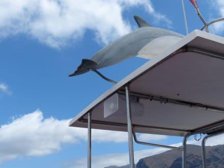 Nashira Uno - Whale Watching