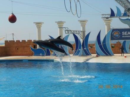 Show - Sealanya Delfinpark