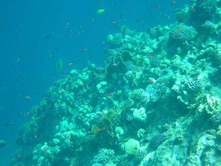 Traumhaftes Riff - Tauchen El Quseir