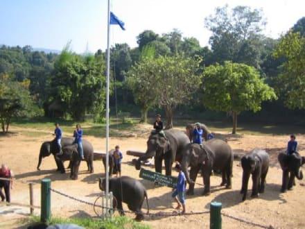 Die Elefanten hissen für uns die Fahne. - Maeping Elephant Camp