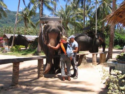 Elefantentrekking - Elefanten-Trecking