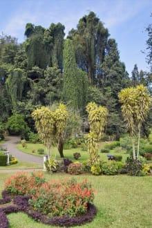 Imposanter Baumbestand - Botanischer Garten Peradeniya