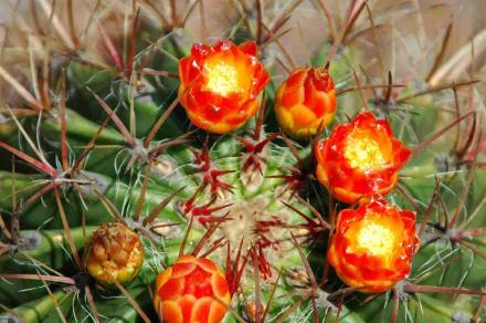Garten der Sukkulenten - Jardins de Mossén Costa i Llobera