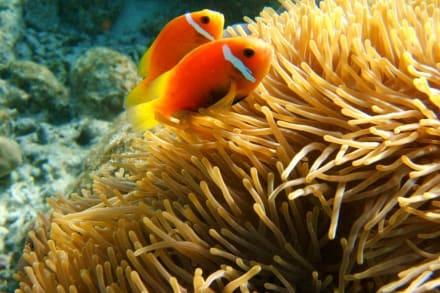 kleinen Nemos - Unterwasser