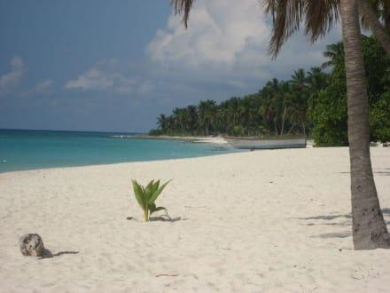 Einsamer Strand Saona - Ausflüge & Touren