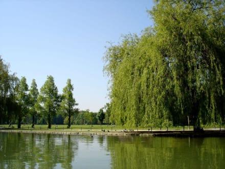 Kleinhesseloher See - Englischer Garten