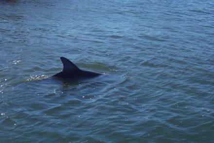 Spannende Augenblicke - Delfin Tour Bunbury