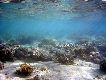 Schnorcheln - Schnorcheln Makadi Bay