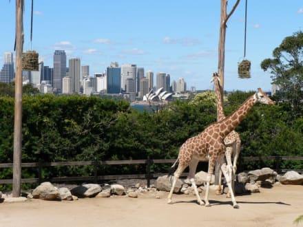 Einmalige Kulisse im Taronga Zoo - Taronga Zoo