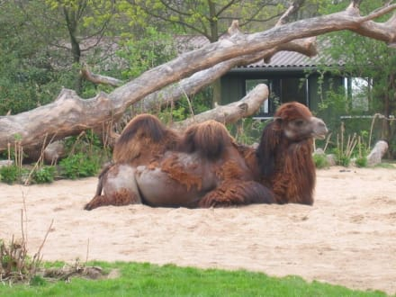 Ruhe genießen. - Zoologischer Garten Köln