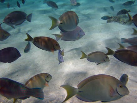 Fische Paradiesinsel - Paradies Insel