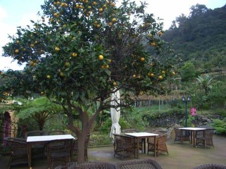 Tea House Quinta do Arco - Tea House Quinta do Arco