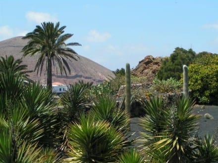 Lanzarote - Jardín de Cactus - Jardin de Cactus / Kaktusgarten Guatiza