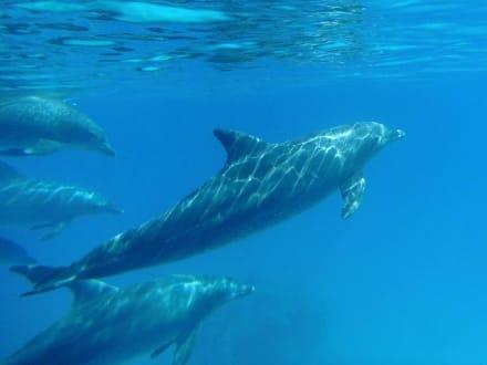 Die Momente einfach nur genießen - Delfinschwimmen Delfine & Meer