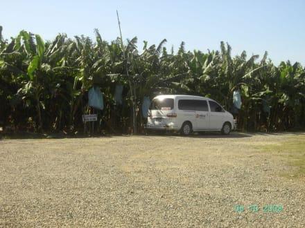 Unser Van vor dem Feld der Bananenplantage - Extra Tours