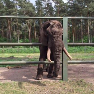 Tiere - Serengeti Park